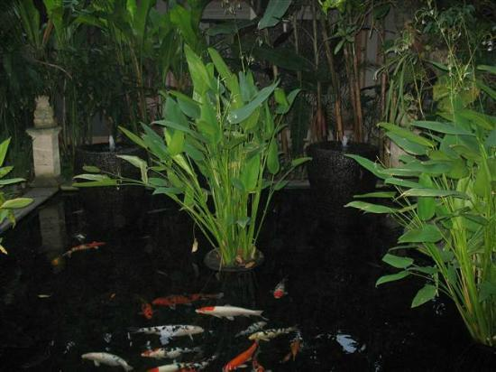 Kuta Seaview Boutique Resort & Spa : Fish Pond