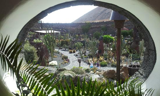 jardin de cactus vue duensemble