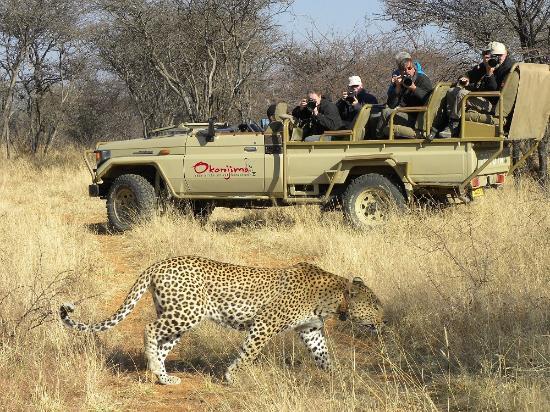 Okonjima Game Reserve : Leopard at Okonjima, Namibia
