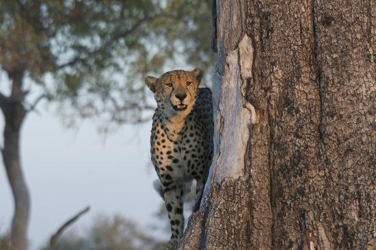 Lagoon Camp - Kwando Safaris: Beautiful animal