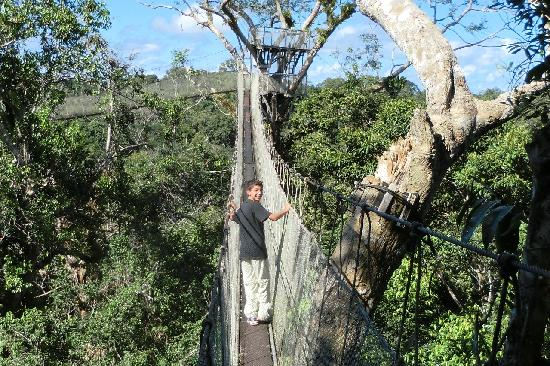 Amazon Explorama Lodges: Canopy walkway