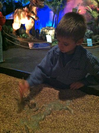 The Putnam Museum & Science Center: uncovering 'fossils' with the animatronic dinosaurs behind.