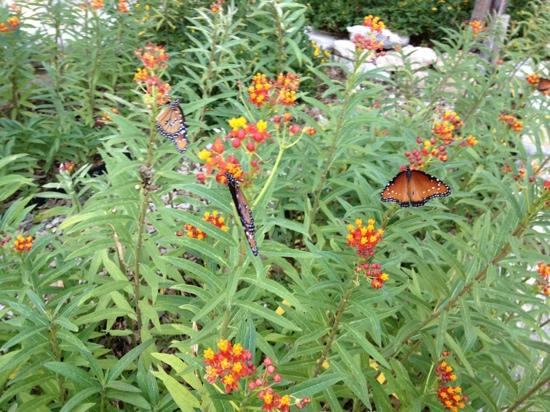 Sage Hill Inn Above Onion Creek: beautiful butterfly garden