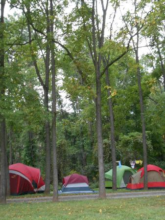 Little Orleans Campground: The surrounding woods