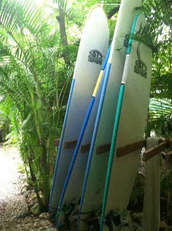 Hotel Tropico Latino: Daily surfboard rental, $10 for a day / $7 for the halfday