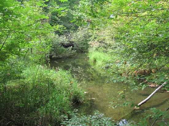 Metamora-Hadley State Recreation Area: Nature Trail Walk