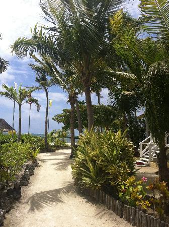 Turneffe Island Resort: Path from cabana to food lodge
