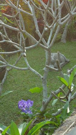 Alam Indah: particolare del giardino