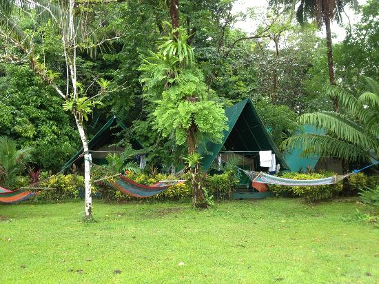 Corcovado Adventures Tent Camp : Tent and Grounds