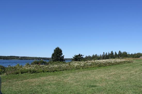 Lookout Inn: Beautiful fields of wild flowers.