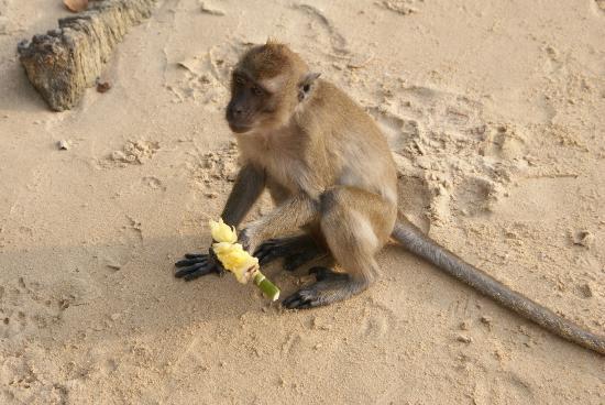 Phra Nang Inn: monkeybeach