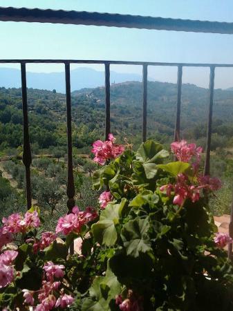 Agriturismo Villa Vea: Vista dal terrazzo delle stanze superiori.
