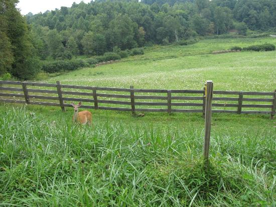 Primland: Deer on entrance greeted us!! Remember this is 12,000 acres of mountain property!