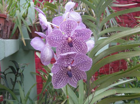 Unawatuna Nor Lanka Hotel: Local orchids