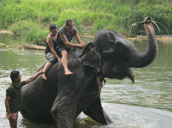 Unawatuna Nor Lanka Hotel: The elephant orphange