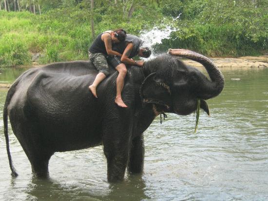 Unawatuna Nor Lanka Hotel : The elephant orphanage