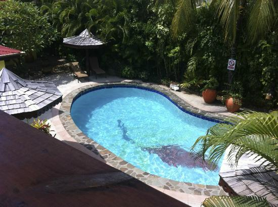 The Ginger Lily Hotel: Swimming pool