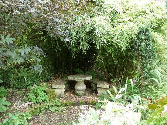 Moorland cottage plants #11