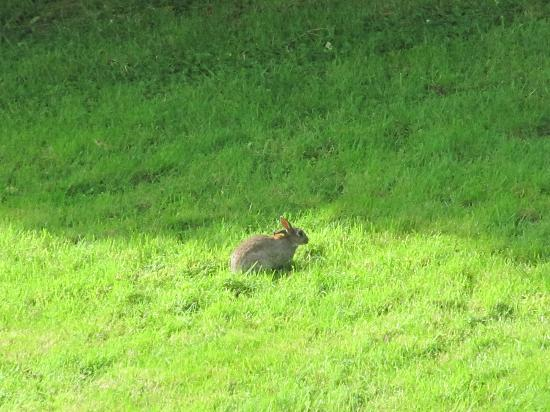 Loch Lomond Youth Hostel: rabbit in the garden spotted from our room