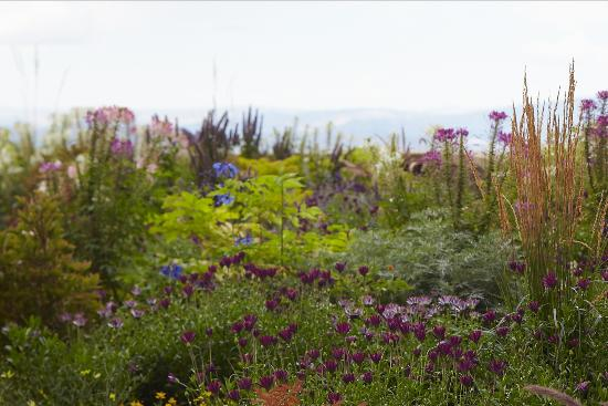 Montage Deer Valley: Some of their beautiful flower beds around the resort