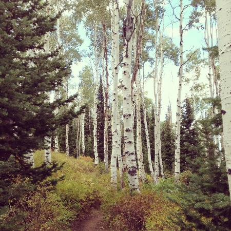 Montage Deer Valley: Aspens around mountain where resort is located