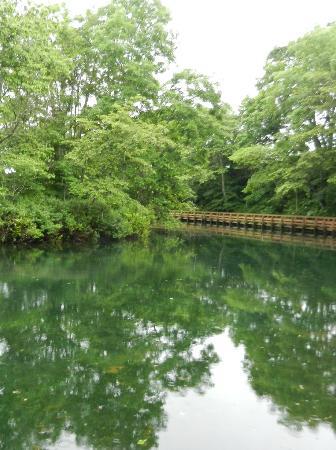 Suigo Park: 木で出来た遊歩道