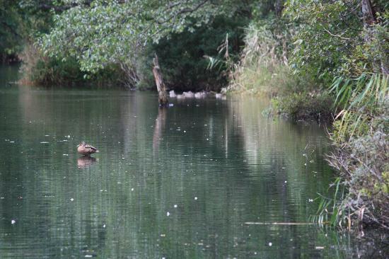 Suigo Park: 池