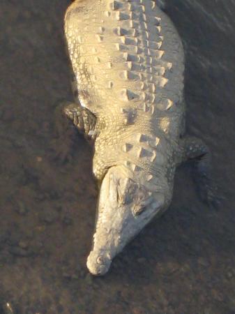 Hotel Mi Tierra: Big Croc 