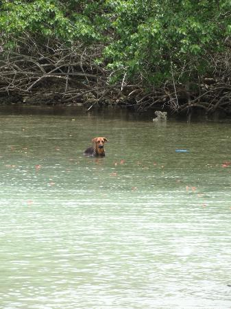 Half Moon Beach : One of the dogs hangin out in the water