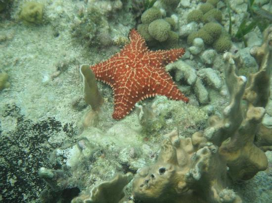 Half Moon Beach: Lots of very large starfish in the bay