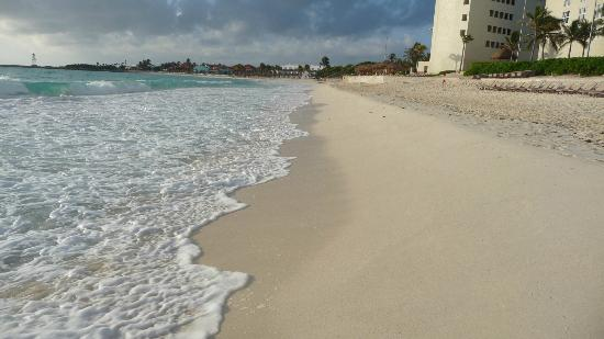 GR Caribe by Solaris: Early morning search for sea turtle tracks