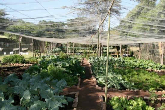 Sekenani Camp: Veggie garden