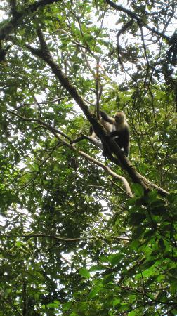 La Carolina Lodge: White Faced Monkey