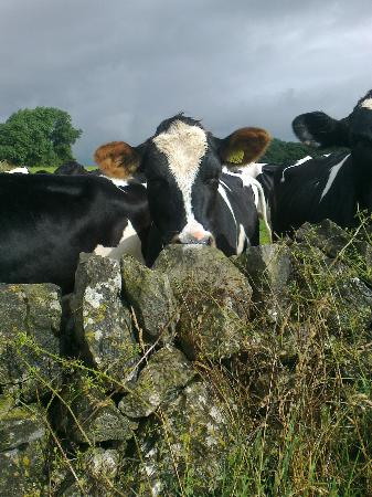 Uppermoor Farmhouse and Holiday Cottages: A Peak District friend!