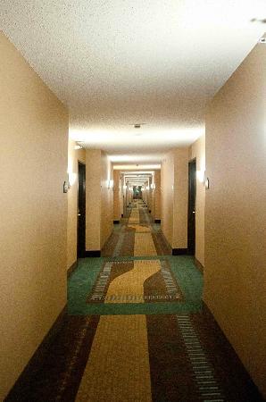 Wingate by Wyndham Gillette: corridoio