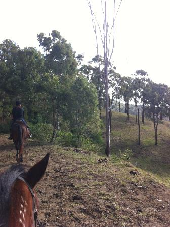 Gumnuts Farm and Horseriding Resort: The view ahead