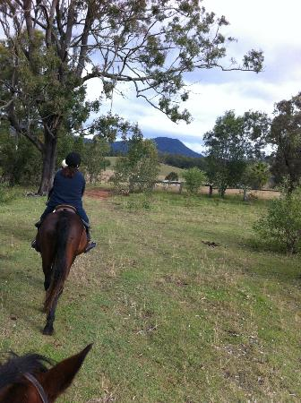 Gumnuts Farm and Horseriding Resort: Bushland
