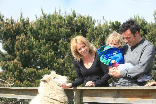 Highland Peaks: Meet NZ's famous sheep