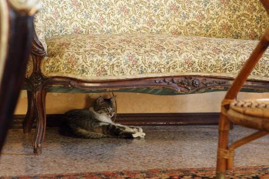 B&B di Charme Camelie: The house cat King Arthur