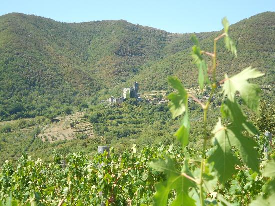 View of the surroundings of Agriturismo Pilari, taken from the owners' wineyard