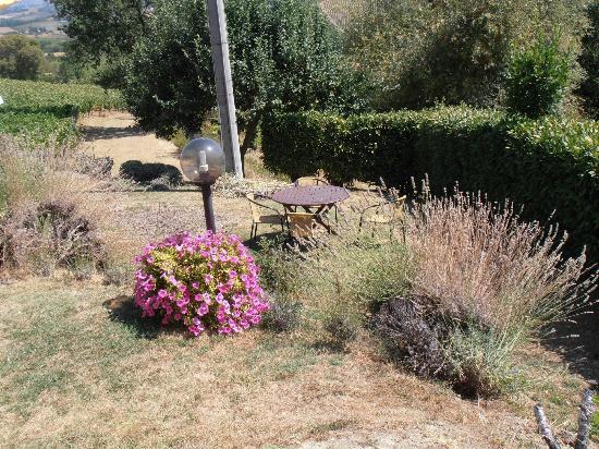 Hotel San Michele: giardino vicino alla piscina