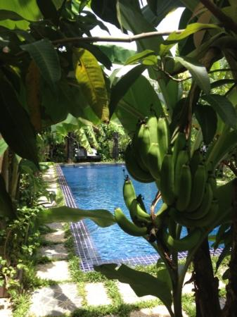 Petit Villa Boutique & Spa: Tropical goodness right outside our door!