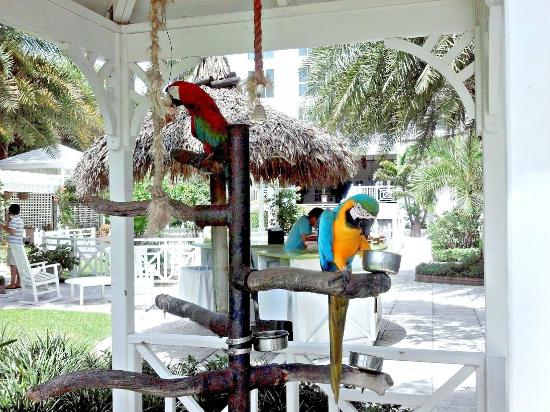 The Palms Hotel & Spa: The Hotel's resident parrots