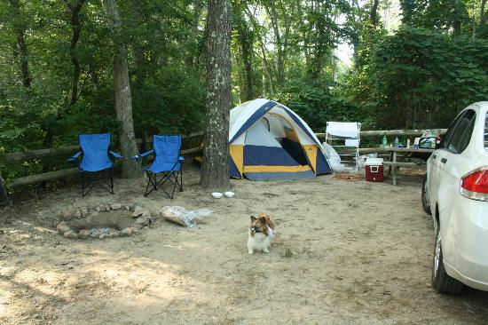 Paines Creek,Brewster Ma  - Picture of Sweetwater Forest Campground