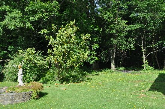 Fir Trees Bed & Breakfast: Natural woodlands at the Fir Trees