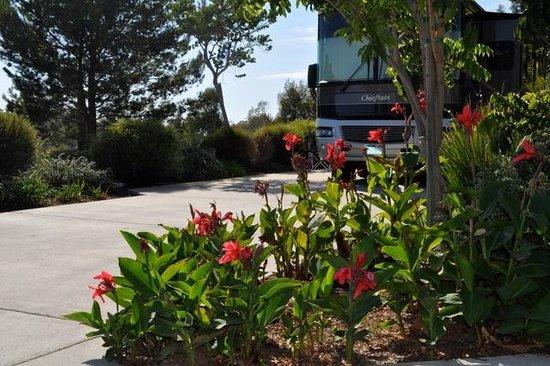 Escondido RV Resort: RV Site
