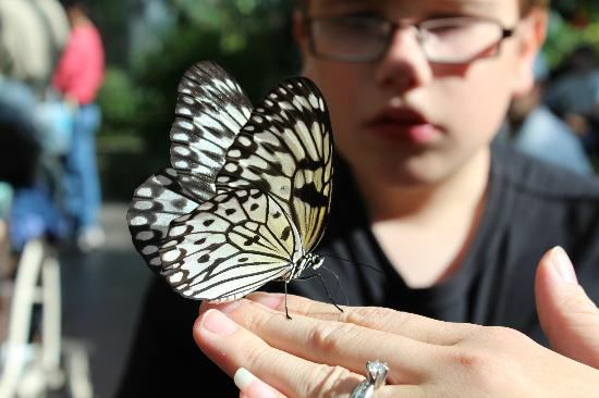The Calgary Zoo: Butterfly Exhibit
