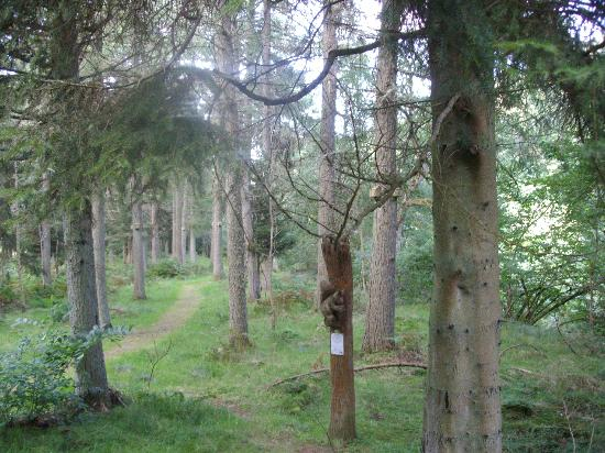 Brae Cottage Bed and Breakfast: Squirrel walk at Hells Hole