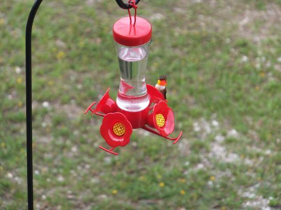 Tschurtschenthaler Lodge B and B: Hummingbird