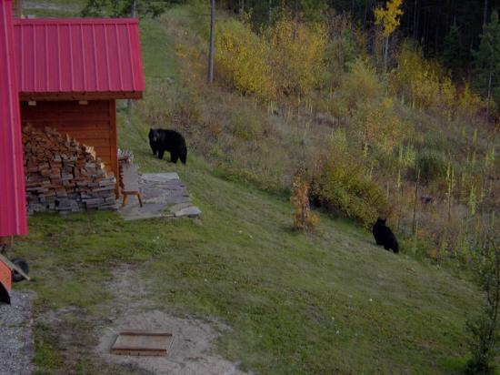 Tschurtschenthaler Lodge B and B: Bear family